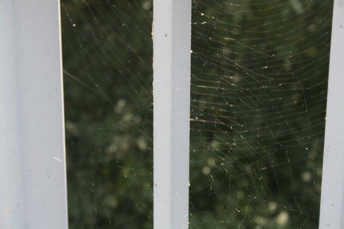 Spinnweben agieren als natürliche Fänger für Feinstaub